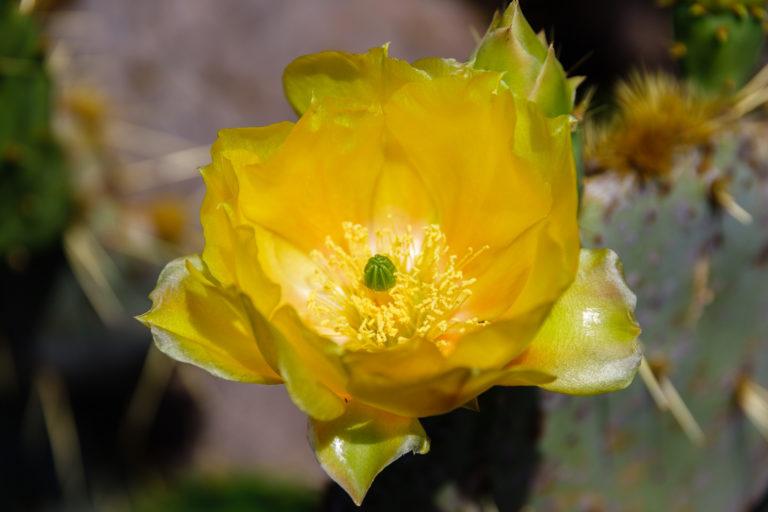 Lanzarote: Jardín de Cactus und Mirador del Rio