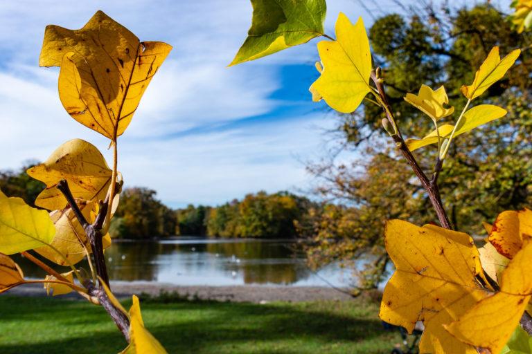 Herbst im Schloßpark Nymphenburg
