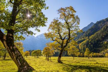 Ahornbäume  Vomp Tirol Österreich by Peter Ehlert in Ahornboden
