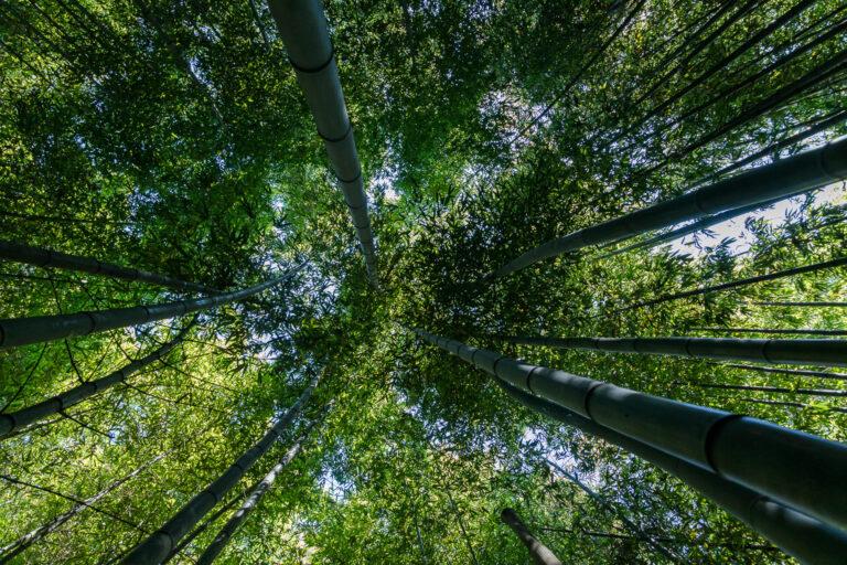 Gard – Bambouseraie