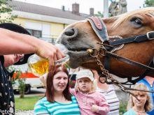 Pferd trinkt Bier  Odelzhausen Bayern Deutschland by Peter Ehlert in 1200 Jahre Odelzhausen