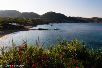 Oleander vor Bucht  Platja es Figueral Balearische Inseln - Ibiza Spanien by Peter Ehlert in Ibiza - Insel des Lichts
