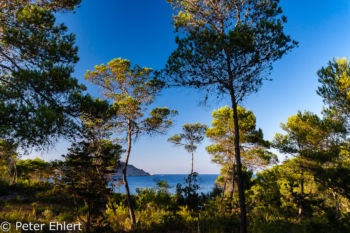 Küstenwald  Platja es Figueral Balearische Inseln - Ibiza Spanien by Peter Ehlert in Ibiza - Insel des Lichts