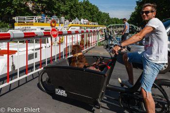 Wartender Radler mit Hund im Lagerfeld Rad  Paris Île-de-France Frankreich by Peter Ehlert in Paris, quer durch die Stadt