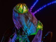 The Mantis - die Gottesanbeterin  Las Vegas Nevada  by Peter Ehlert in Las Vegas Downtown