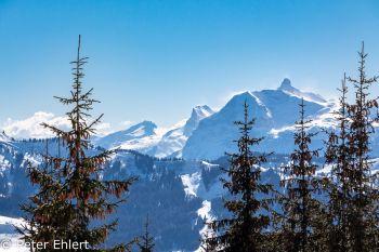 Berge mit Tannen  Morzine Rhône-Alpes Frankreich by Peter Ehlert in Skigebiet Portes du Soleil