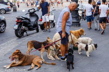 Hundesitter  Neapel Campania Italien by Peter Ehlert in Pompeii und Neapel