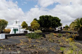 Garten und Kassengebäude  Teguise Canarias Spanien by Peter Ehlert in LanzaroteFundacion