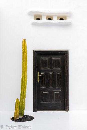 Dunkle Tür mit Kaktus  Teguise Canarias Spanien by Peter Ehlert in LanzaroteFundacion