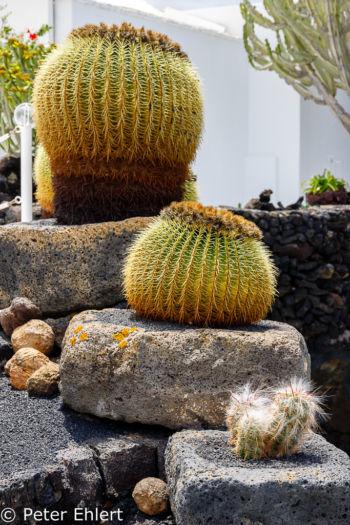 Bepflanzung auf der Terrasse  Teguise Canarias Spanien by Peter Ehlert in LanzaroteFundacion