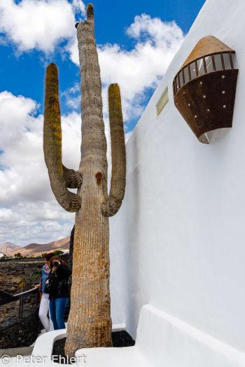 Kaktus und Mauer  Teguise Canarias Spanien by Peter Ehlert in LanzaroteFundacion