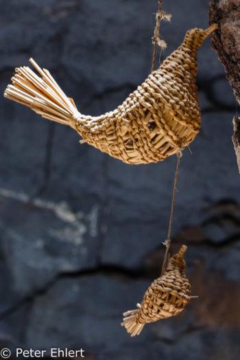 Kunstvogel  Teguise Canarias Spanien by Lara Ehlert in LanzaroteFundacion