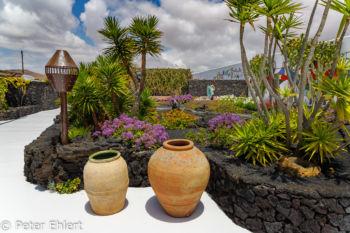 Garten  Teguise Canarias Spanien by Peter Ehlert in LanzaroteFundacion