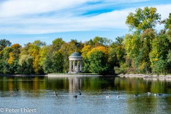 Badenburger See mit Apollo Tempel  München Bayern Deutschland by Peter Ehlert in MUC-Nyphenburg