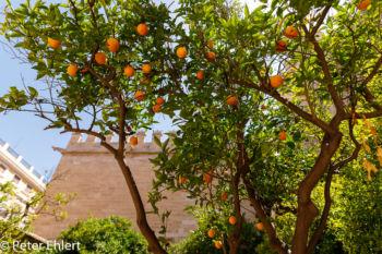 Innenhof mit Orangenbaum  Valencia Provinz Valencia Spanien by Peter Ehlert in Valencia_Seidenbörse