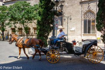 Pferdekutsche vor Seidenbörse  Valencia Provinz Valencia Spanien by Lara Ehlert in Valencia_Stadtrundgang