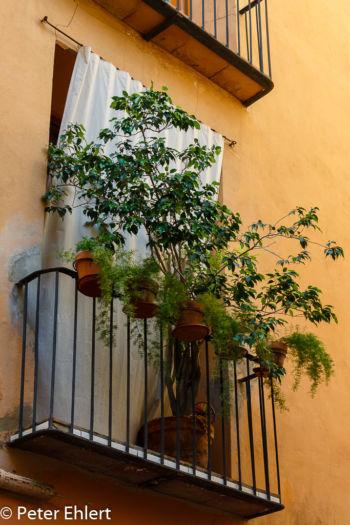 Balkon mit Pflanzen  Valencia Provinz Valencia Spanien by Lara Ehlert in Valencia_Stadtrundgang