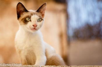 Junge Katze  Valencia Provinz Valencia Spanien by Lara Ehlert in Valencia_Stadtrundgang