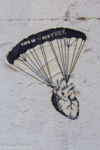 Life is to fly free  Valencia Provinz Valencia Spanien by Lara Ehlert in Valencia_Stadtrundgang