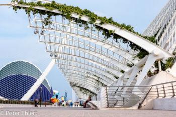 Dach am Umbracle  Valencia Provinz Valencia Spanien by Peter Ehlert in Valencia_Arts i Ciences