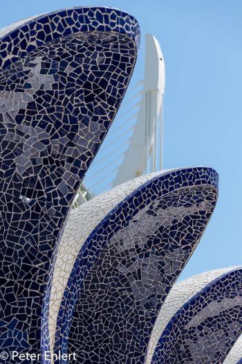 Fliesenmuscheln  Valencia Provinz Valencia Spanien by Peter Ehlert in Valencia_Arts i Ciences