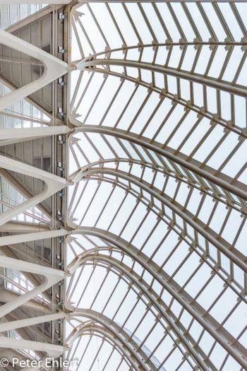 Strebenkonstruktion  Valencia Provinz Valencia Spanien by Lara Ehlert in Valencia_Museu_Ciences