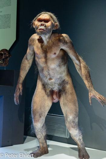 Neandertaler  Valencia Provinz Valencia Spanien by Lara Ehlert in Valencia_Museu_Ciences