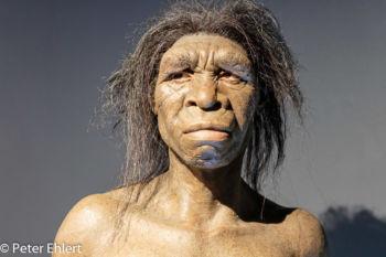 Australopithecus Afarensis  Valencia Provinz Valencia Spanien by Lara Ehlert in Valencia_Museu_Ciences