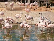 Flamingos  Valencia Provinz Valencia Spanien by Lara Ehlert in Valencia_Oceanografic