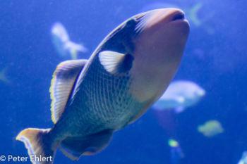 Fisch  Valencia Provinz Valencia Spanien by Lara Ehlert in Valencia_Oceanografic
