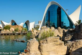 See mit Eingangsgebäude  Valencia Provinz Valencia Spanien by Peter Ehlert in Valencia_Oceanografic
