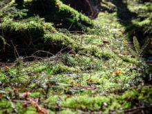 Frisches Grün  Odelzhausen Bayern Deutschland by Peter Ehlert in Wald-April